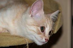 Gatto rosso, gatto della pesca, gattino sveglio immagini stock