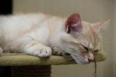 Gatto rosso, gatto della pesca, gattino sveglio immagine stock libera da diritti