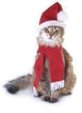 Gatto rosso di natale Fotografie Stock Libere da Diritti