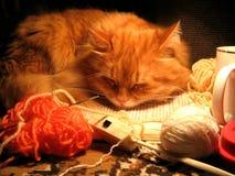 Gatto rosso di sonno Fotografia Stock