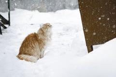 Gatto rosso divertendosi nella neve immagini stock