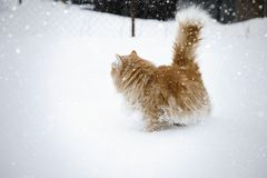 Gatto rosso divertendosi nella neve fotografie stock libere da diritti