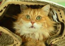 Gatto rosso divertente Immagini Stock Libere da Diritti
