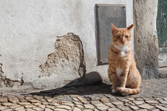 Gatto rosso II Immagini Stock Libere da Diritti