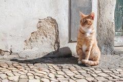 Gatto rosso III Fotografie Stock