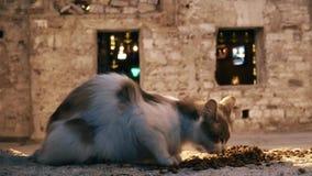 Gatto rosso senza tetto che mangia alimento sulla via di Bodrum, Turchia archivi video