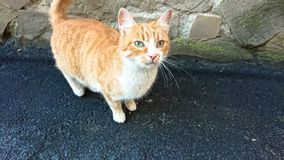Gatto rosso senza tetto sulla pavimentazione dell'asfalto fotografia stock libera da diritti
