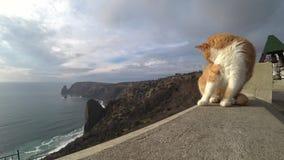 Gatto rosso sui precedenti della riva di mare archivi video