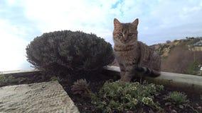 Gatto rosso sui precedenti della riva di mare stock footage