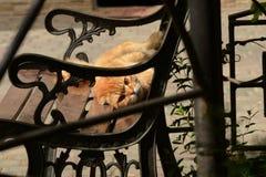 Gatto rosso sul sole fotografia stock