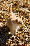 Gatto rosso sull'foglie Fotografia Stock Libera da Diritti