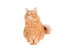 Gatto rosso sveglio Fotografie Stock Libere da Diritti