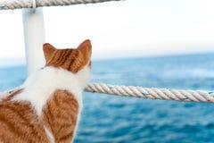Gatto rosso sveglio che distoglie lo sguardo sedentesi sul pilastro alla spiaggia Fotografia Stock