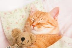 Gatto rosso sveglio di sonno su un letto Immagini Stock Libere da Diritti