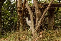 Gatto rurale Foresta tropicale nelle montagne sull'isola del Madera Fotografia Stock