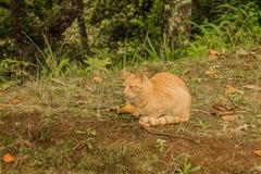 Gatto rurale Foresta tropicale nelle montagne sull'isola del Madera Immagini Stock