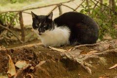 Gatto rurale Foresta tropicale nelle montagne sull'isola del Madera Fotografie Stock Libere da Diritti