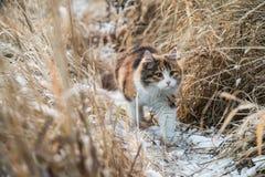 Gatto russo Fotografia Stock
