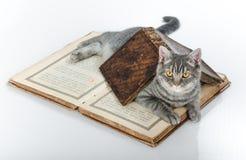 Gatto scientifico con i libri sulla tavola Immagini Stock