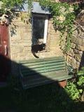 Gatto seduto sul davanzale della tettoia Immagine Stock