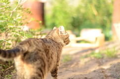 Gatto selvaggio Immagine Stock