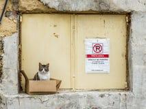Gatto selvaggio Malta fotografie stock
