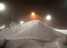 Gatto selvatico che rimuove neve Fotografia Stock Libera da Diritti