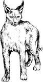 Gatto selvatico disegnato a mano Immagine Stock