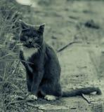 Gatto senza casa Fotografia Stock Libera da Diritti