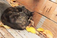 Gatto senza casa Immagini Stock