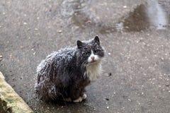 Gatto senza tetto fotografie stock libere da diritti