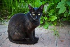 Gatto severo della via Gatto severo della via Fotografia Stock
