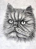 Gatto siberiano lanuginoso Ritratto Acquerello bagnato di verniciatura su carta Arte ingenuo Acquerello del disegno su carta royalty illustrazione gratis