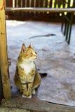 Gatto smarrito amichevole che posa per l'immagine Fotografia Stock