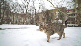 Gatto smarrito che cammina sulle vie di vecchia città Odessa all'inverno video d archivio