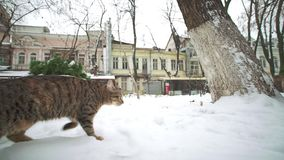 Gatto smarrito che exloring vecchia città di Odessa all'inverno stock footage