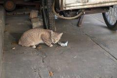 Gatto smarrito che mangia alimento che la gente ha messo sopra la via Immagini Stock Libere da Diritti