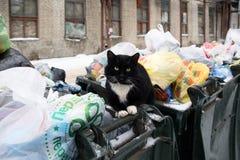 Gatto smarrito che si siede su una pattumiera fotografia stock libera da diritti
