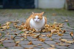 Gatto smarrito che si siede sulle foglie di autunno fotografia stock libera da diritti