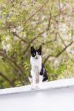 Gatto smarrito colorato in bianco e nero Fotografie Stock
