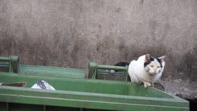 Gatto smarrito del senzatetto che si trova sul contenitore ripugnante dell'immondizia - primo piano video d archivio