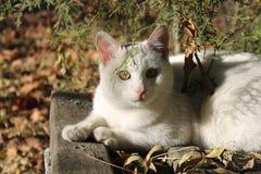 Gatto smarrito di bianco che guarda da sotto un ramo di albero Fotografie Stock Libere da Diritti