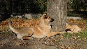 Gatto smarrito e cane che giocano sotto un albero Immagine Stock Libera da Diritti