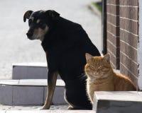 Gatto smarrito e cane che prendono il sole Fotografia Stock