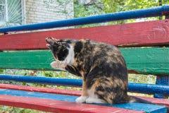 Gatto smarrito multicolore che si siede sullo sfondo naturale Lavarsi fotografia stock libera da diritti