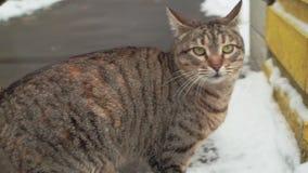 Gatto smarrito sulle vie della neve di Odessa video d archivio