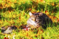 Gatto soleggiato, felicità Fotografia Stock