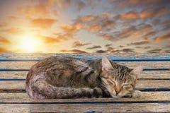 Gatto sonnolento Fotografie Stock