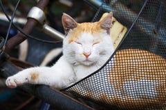 Gatto sonnolento Fotografie Stock Libere da Diritti