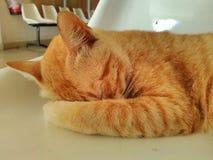 Gatto sonnolento nella sedia immagini stock libere da diritti